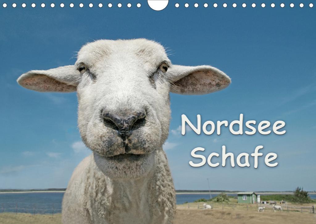 Nordsee Schafe (Wandkalender 2020 DIN A4 quer)