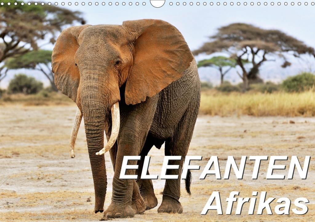 Elefanten Afrikas (Wandkalender 2020 DIN A3 quer)