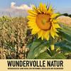 Wundervolle Natur: Naturgeräusche (ohne Musik) zum Entspannen, Regenerieren und Einschlafen
