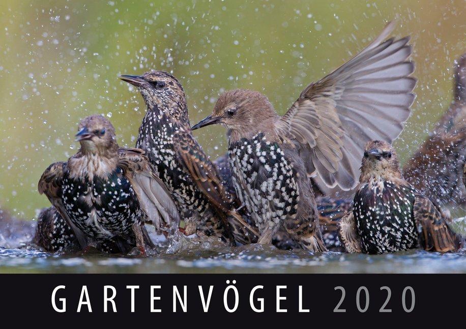 Gartenvögel 2020