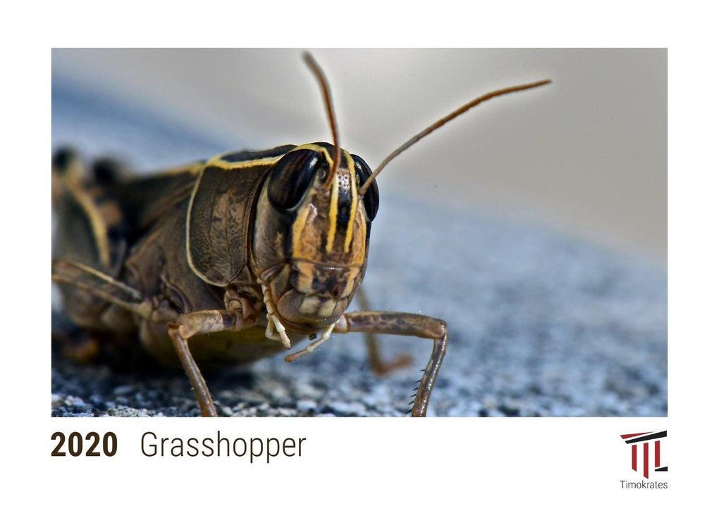 Grasshopper 2020 - Timokrates desk calendar with UK holidays / picture calendar / photo calendar - DIN A5 (21 x 15 cm)