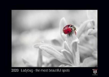 Ladybug - the most beautiful spots 2020 - Black Edition - Timocrates wall calendar with US holidays / picture calendar / photo calendar - DIN A4 (30 x 21 cm)