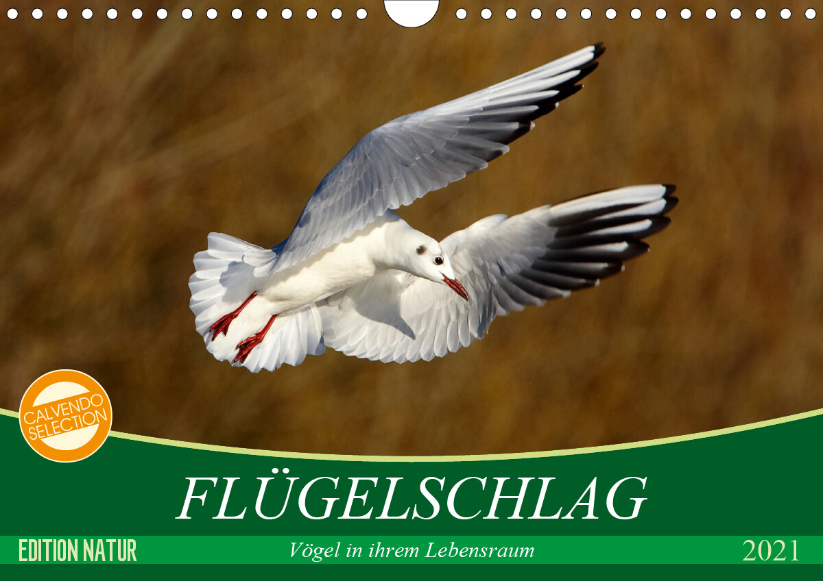 Flügelschlag - Vögel in ihrem natürlichen Lebensraum (Wandkalender 2021 DIN A4 quer)