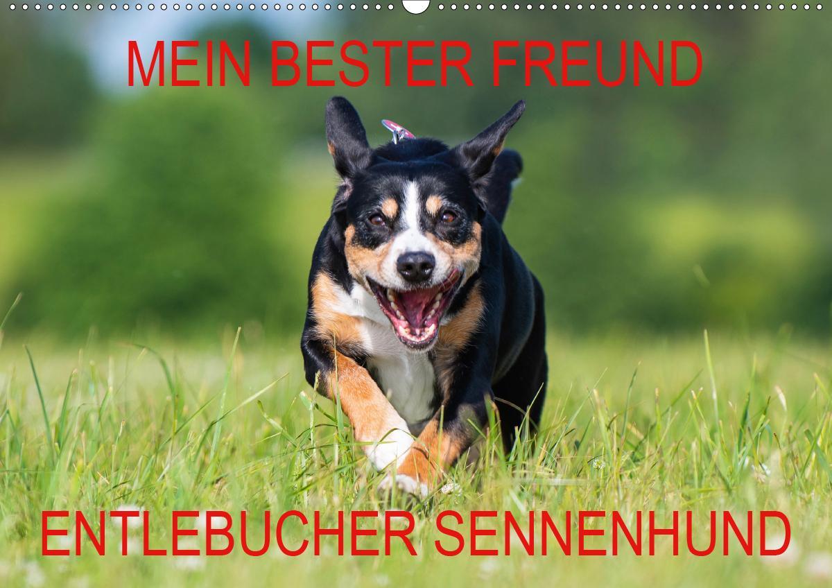 Mein bester Freund - Entlebucher Sennenhund (Wandkalender 2021 DIN A2 quer)