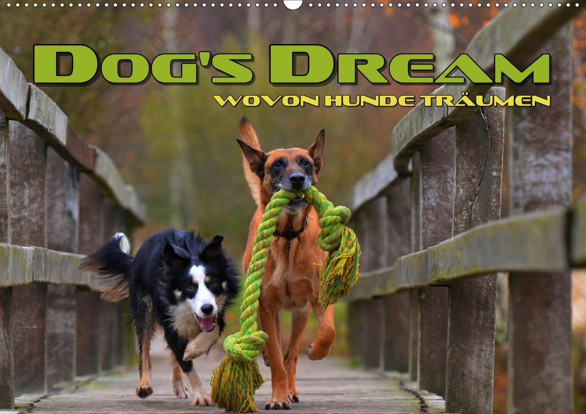 DOG'S DREAM - wovon Hunde träumen (Wandkalender 2021 DIN A2 quer)